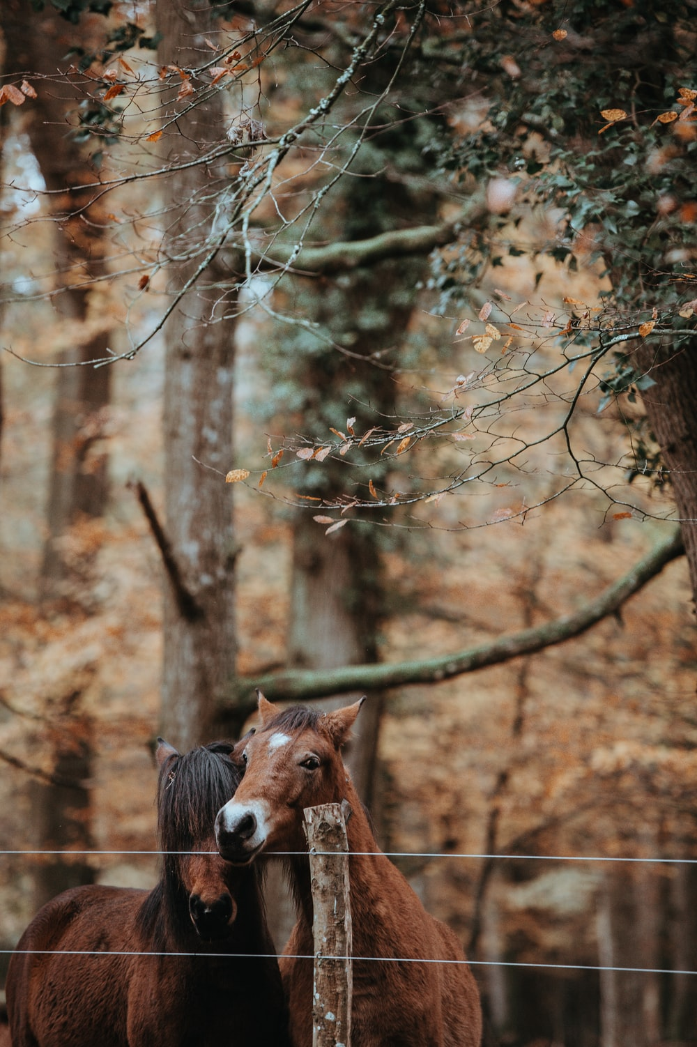 two brown horses under green leafed tree during daytime