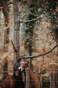 New Forest Ponies nestling together in the Autumnal woodland