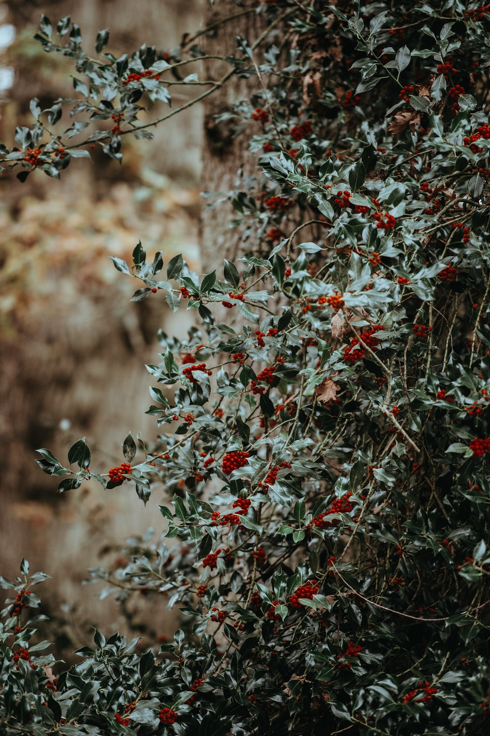 closeup photography of green and red plants