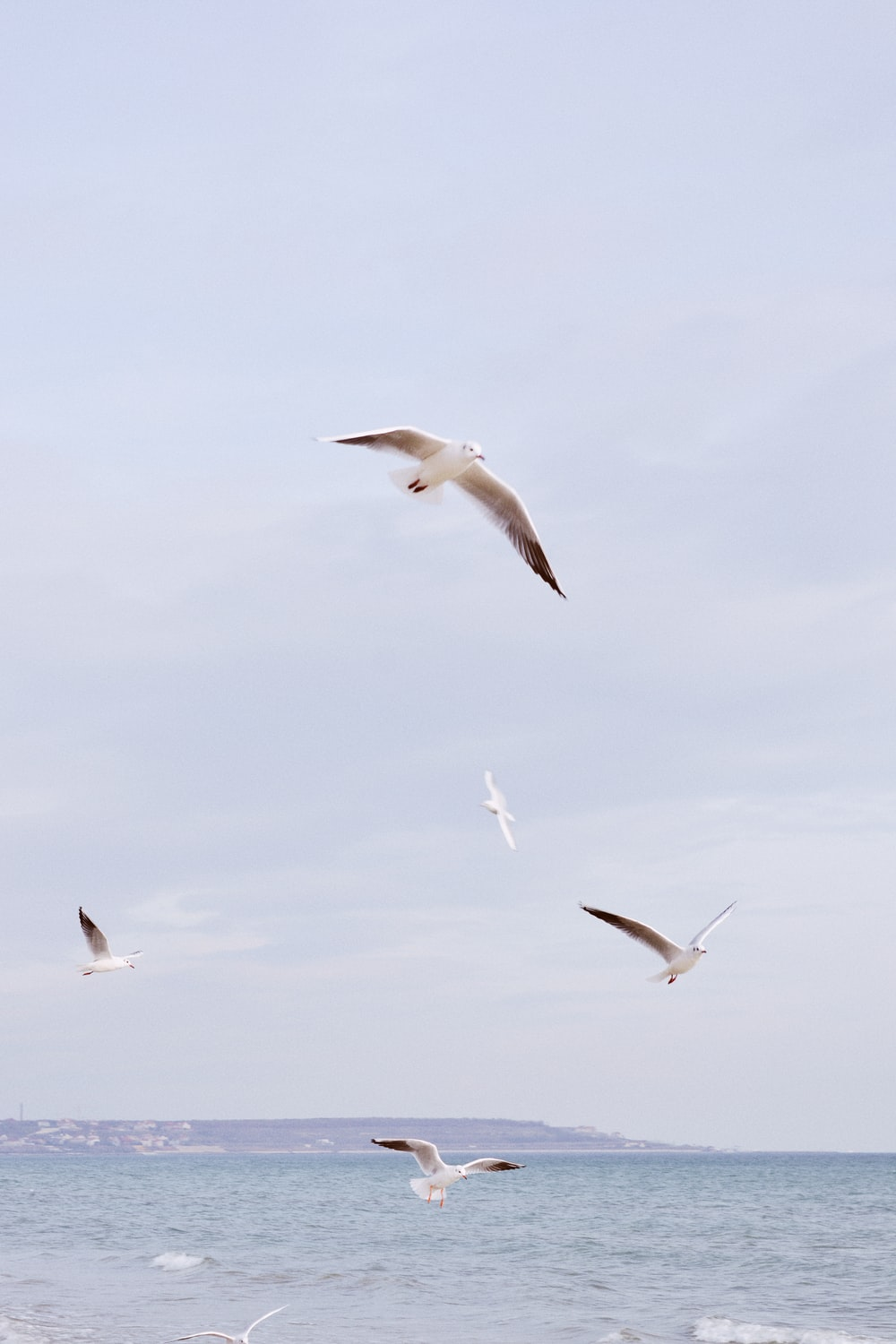 white birds flying above the sea