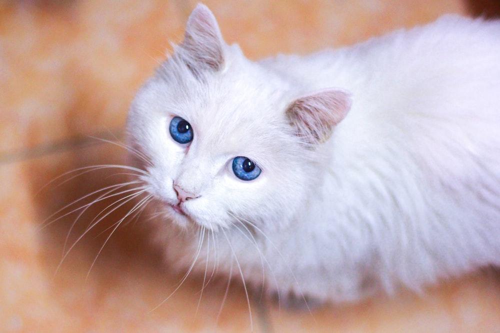 closeup photo of white cat on floor