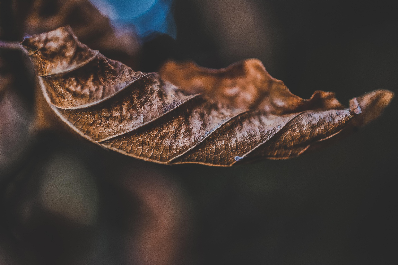 macro shot photography of dried leaf