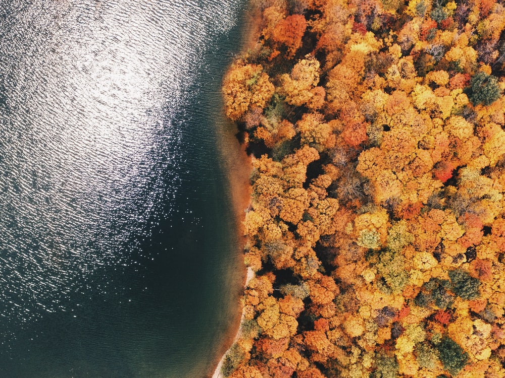 aerial photography of forest near sea