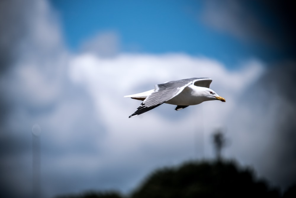 shallow focus photography of of white bird