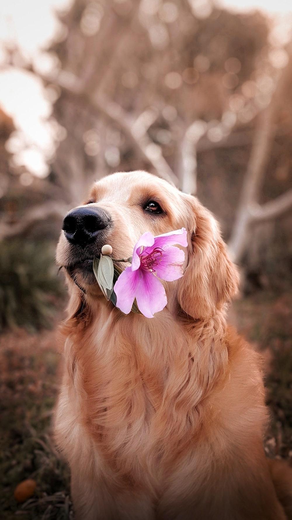 dog holding flower