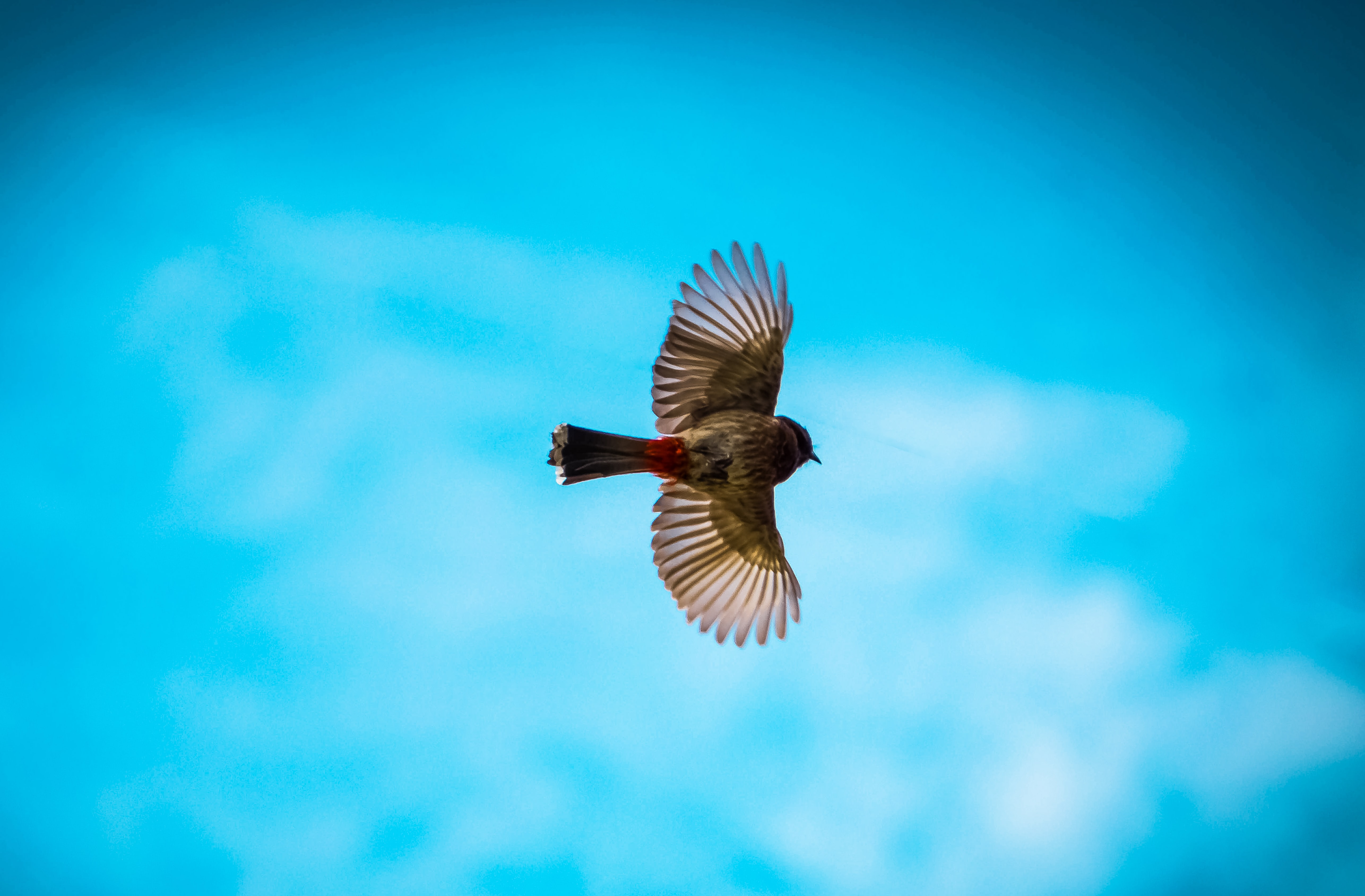 selective focus photography of bird flying