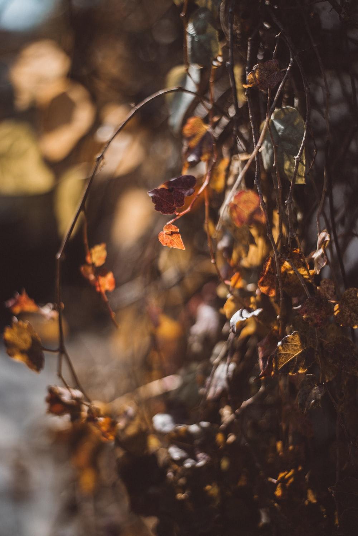 macro shot of orange leaves