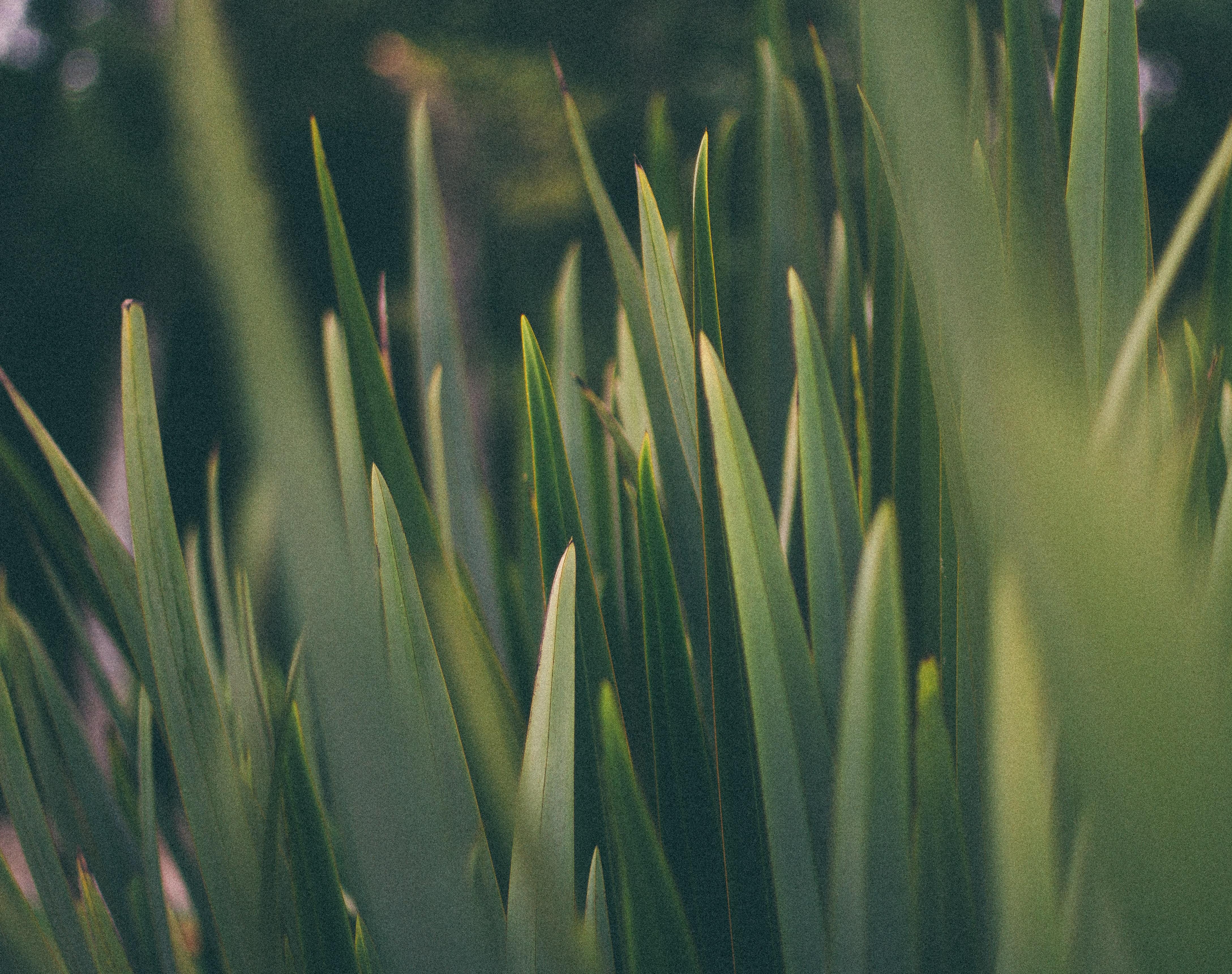 macro shot photography of grass