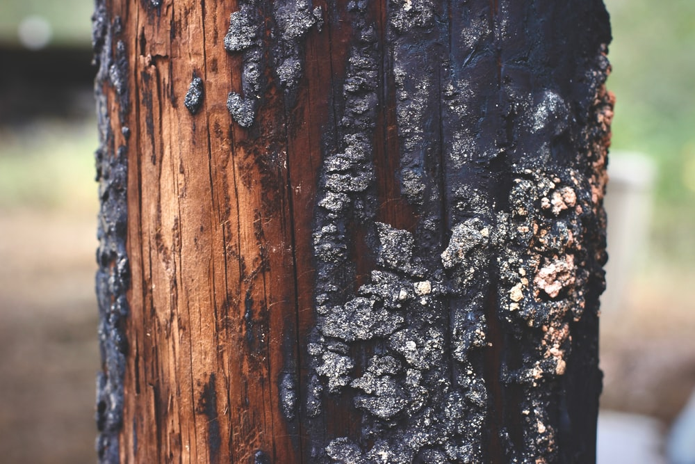 shallow focus photo of tree log
