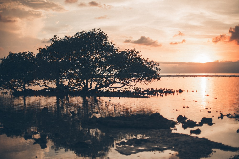 silhouette of tree on body of water