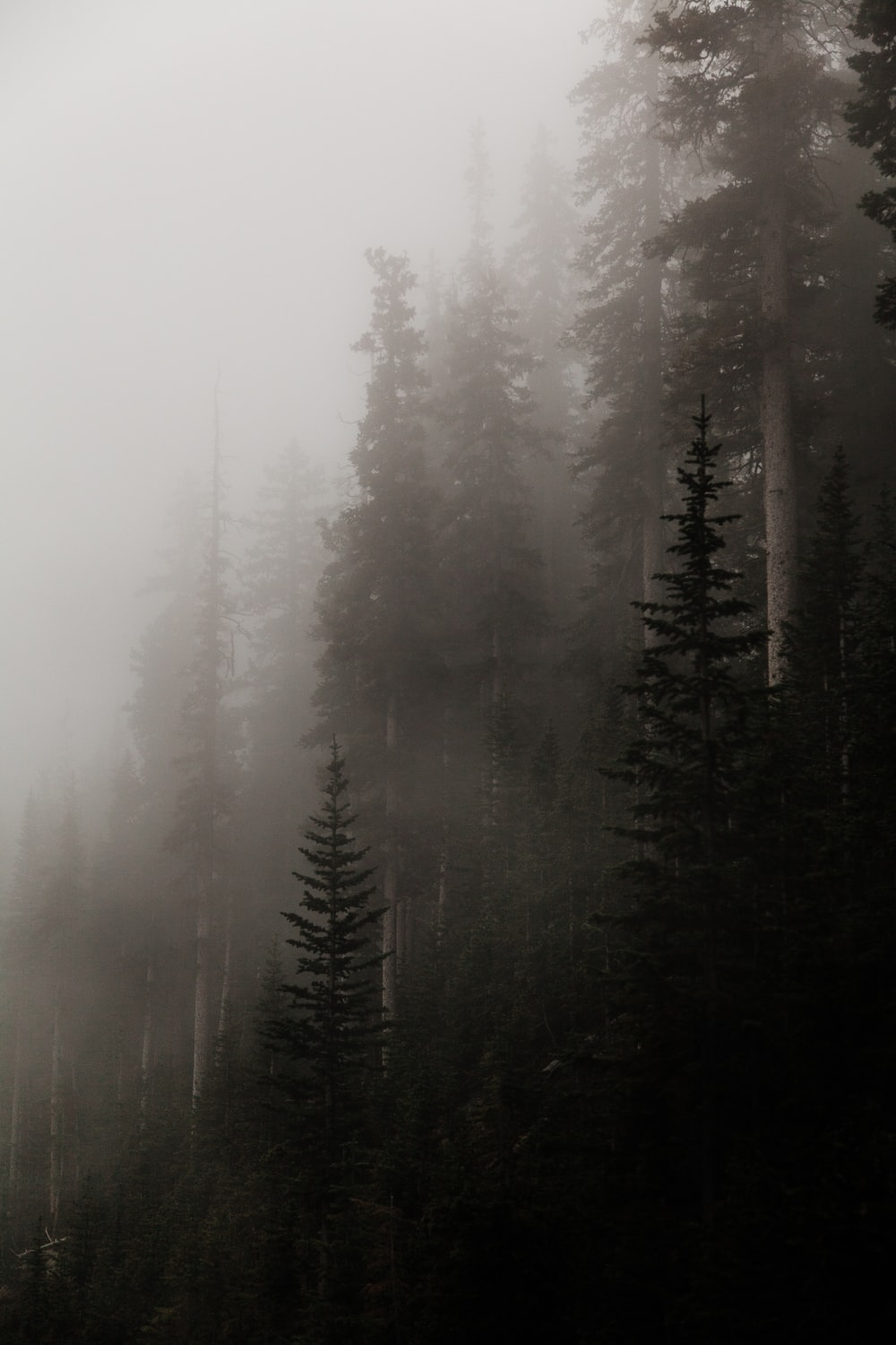 forest covered in fog