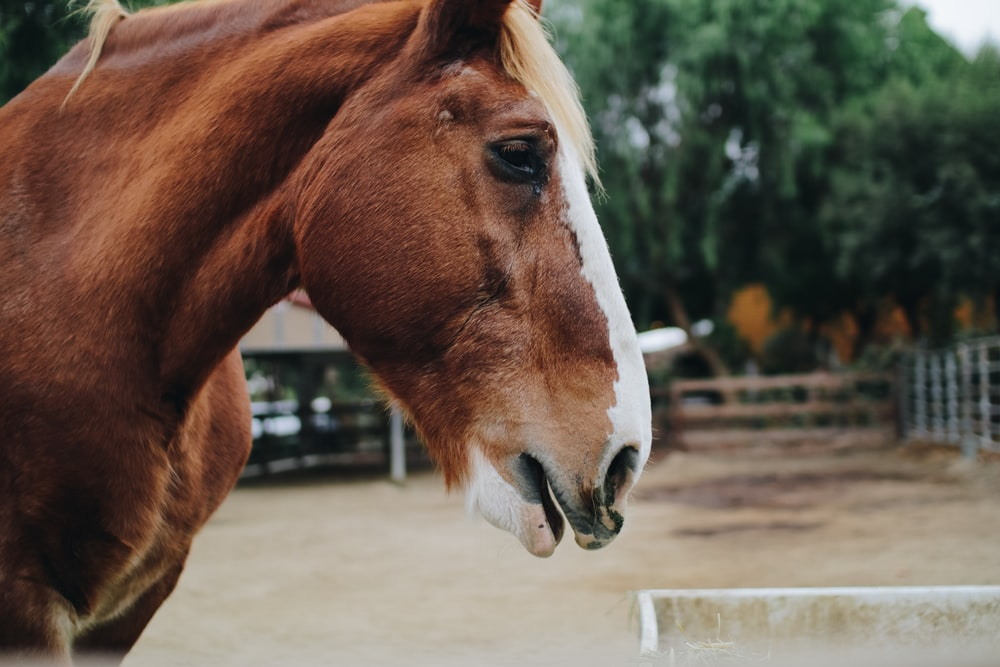 close up photography of brown and white horse