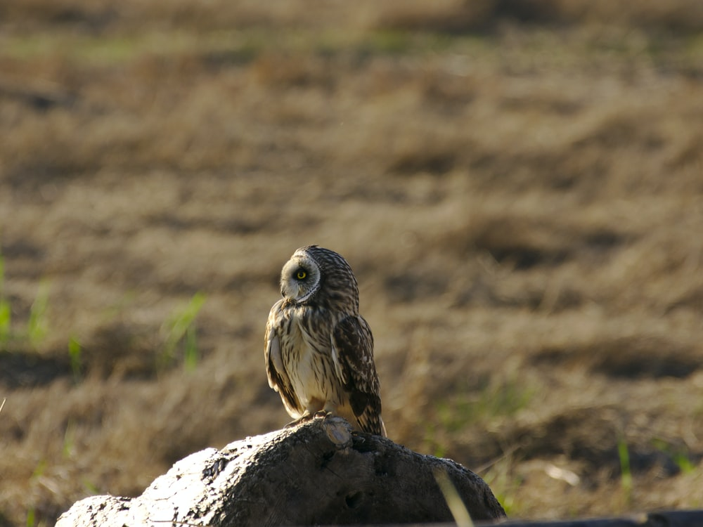 gray and black owl on gray rock