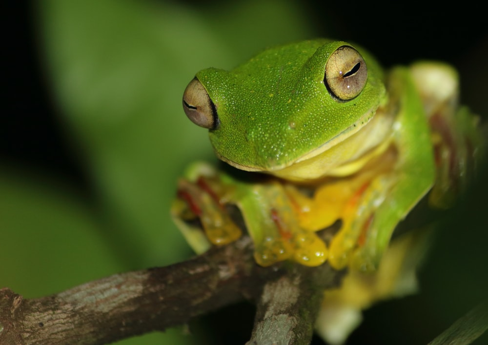 close up photography of green frog on brown stem