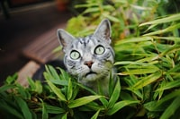 silver tabby cat on green leafed plant