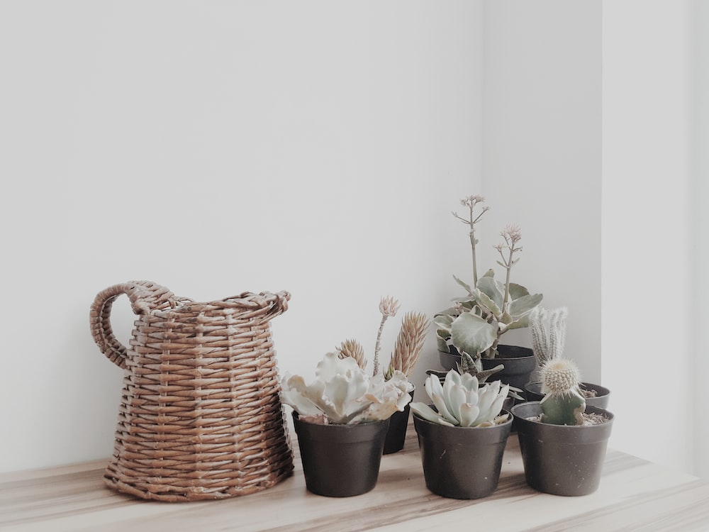 green succulent plants in pots on table near wall