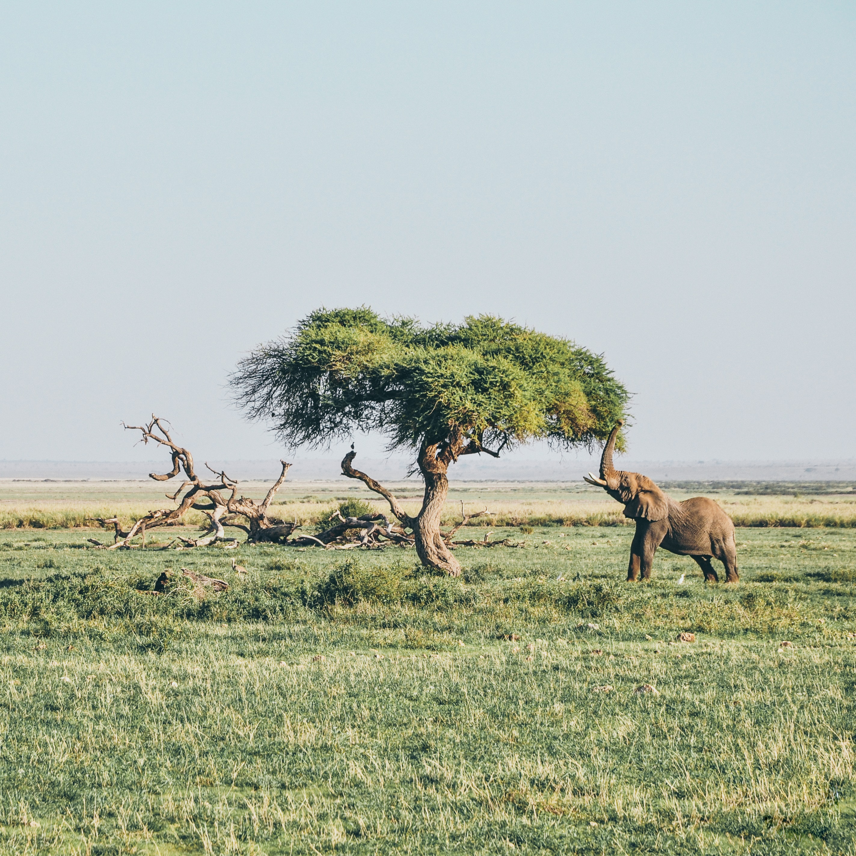 brown elephant under tree at daytime