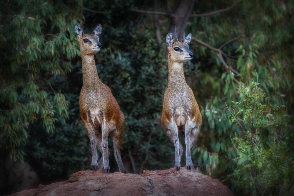 two deer standing on ground surrounded by green leaf plants