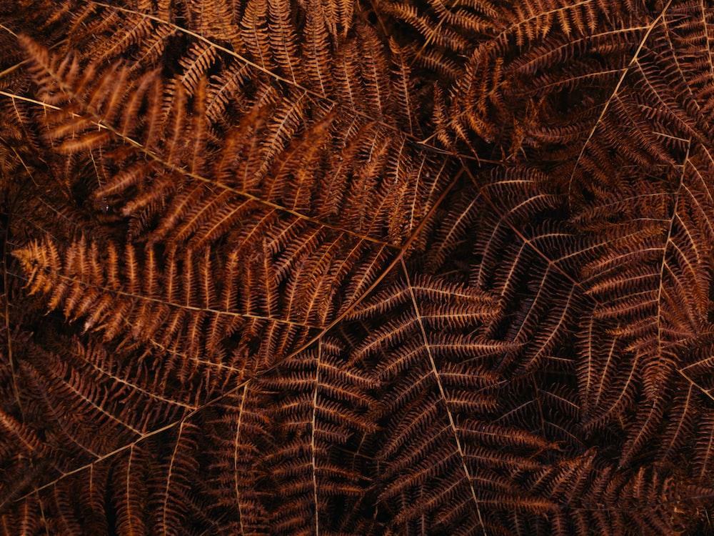 brown leaf closeup photo