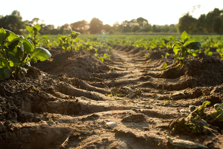 Carbon Emissions Get a Fix on the Farm