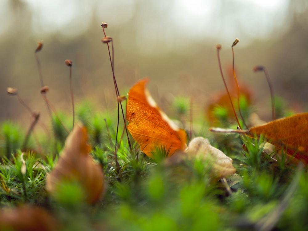 brown dried leaf on green grass field