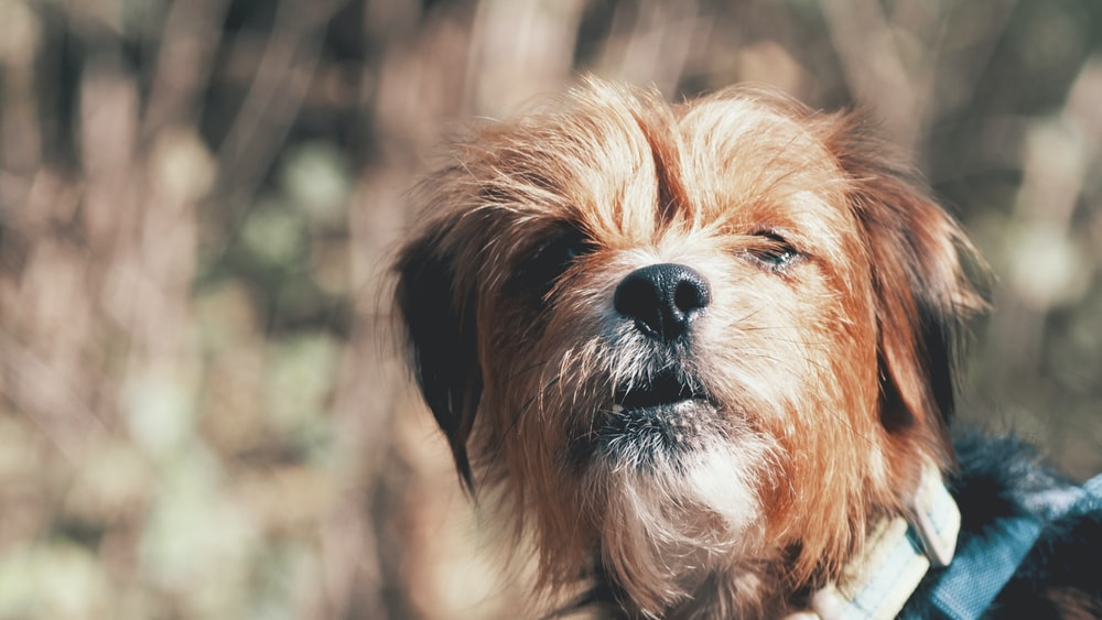 short-coated brown dog closeup photo