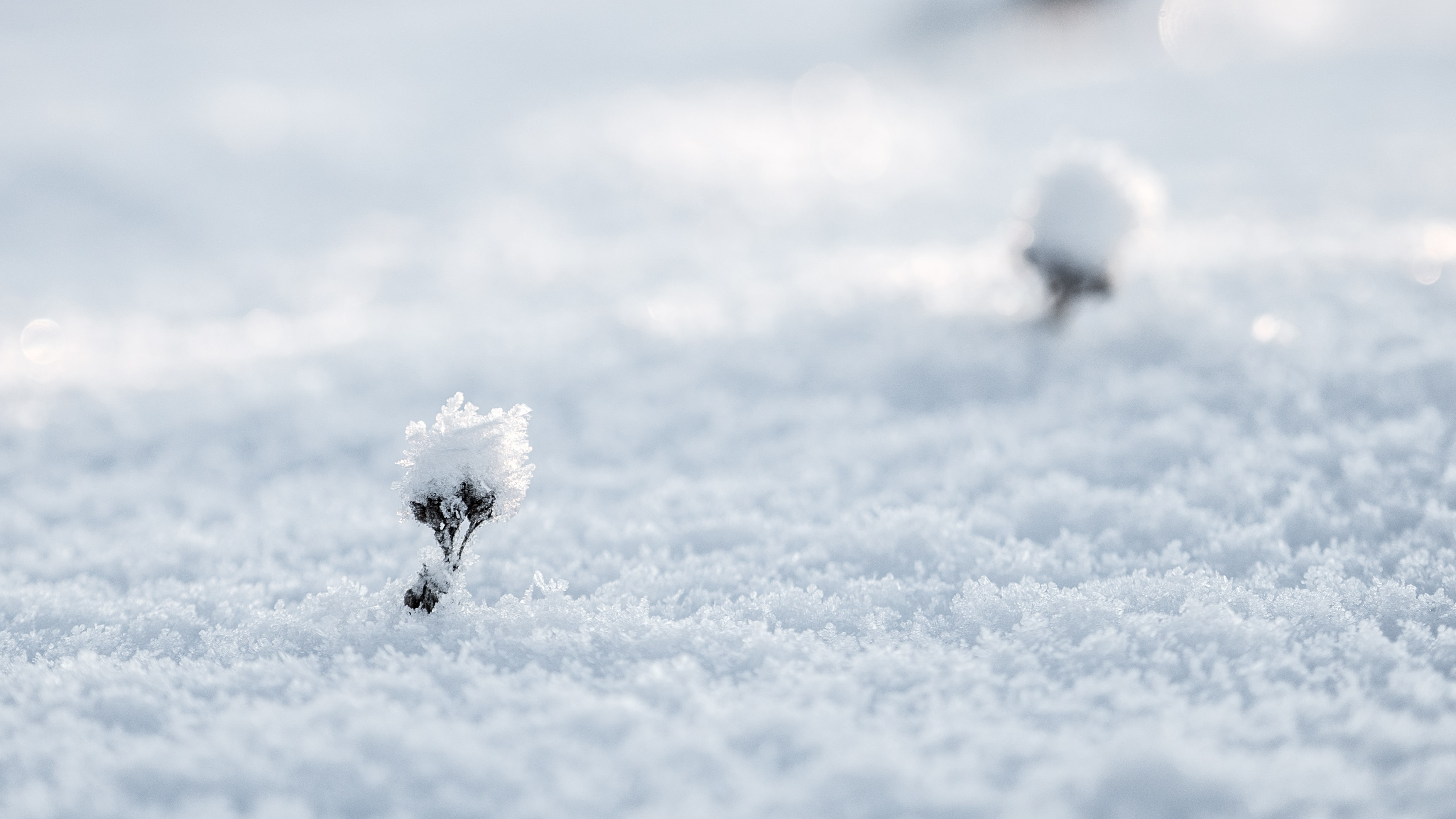 selective photography of snow