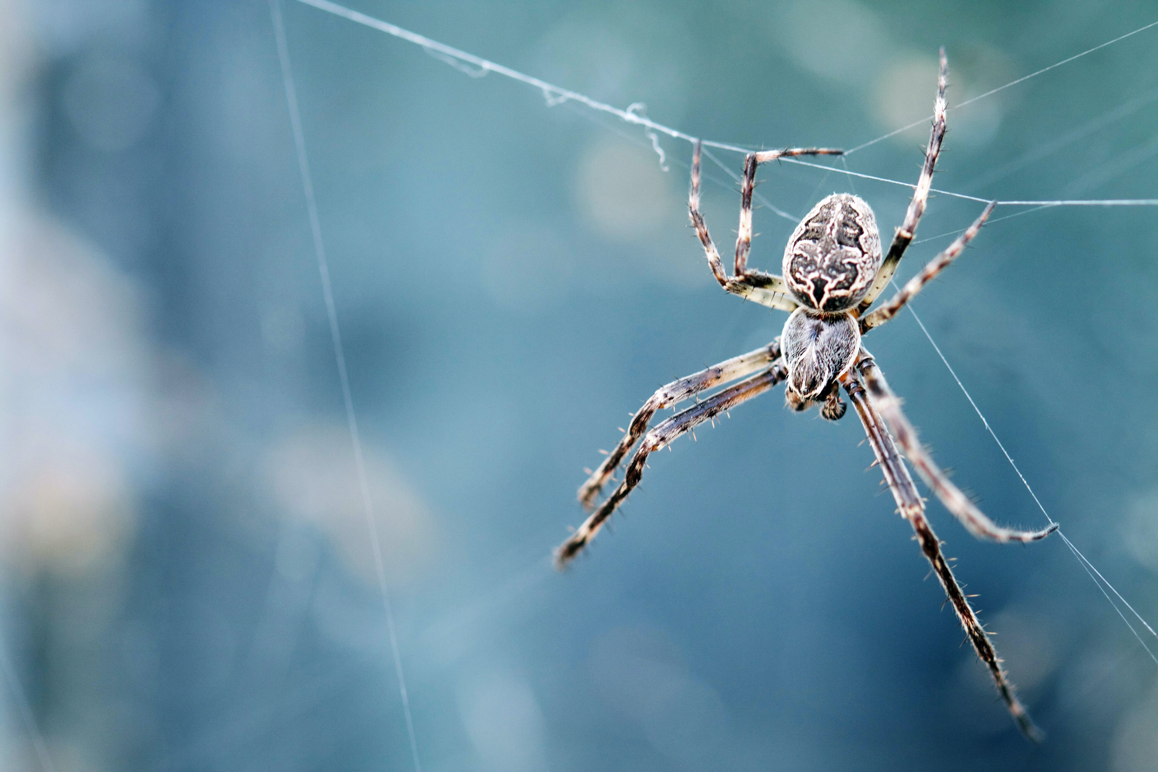 closeup photography of brown spider