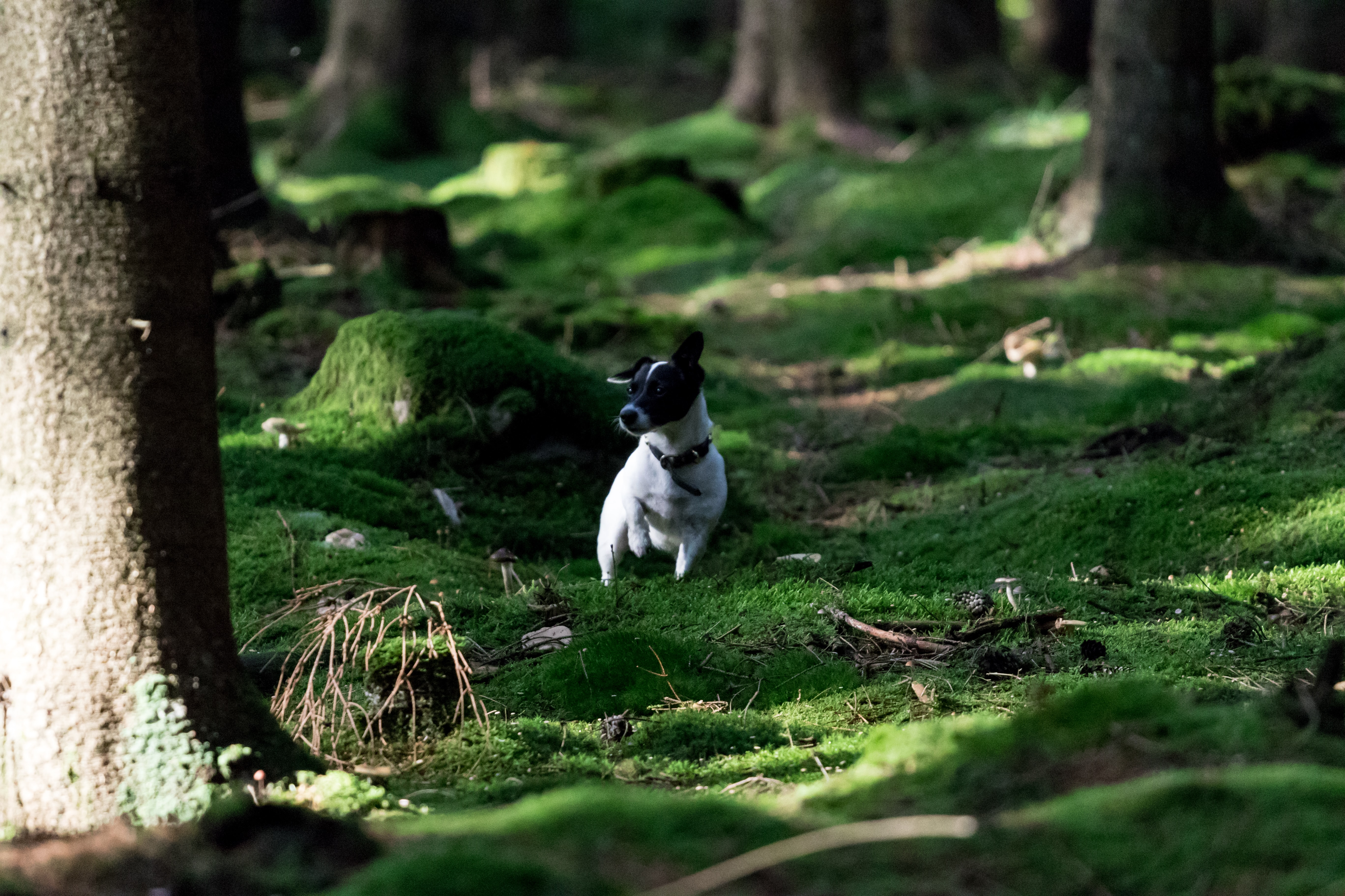 white and black dog on grass field between trees at daytime