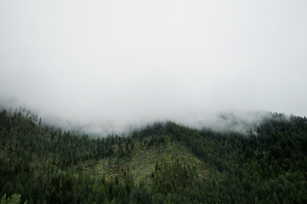 aerial photography of foggy mountain with trees