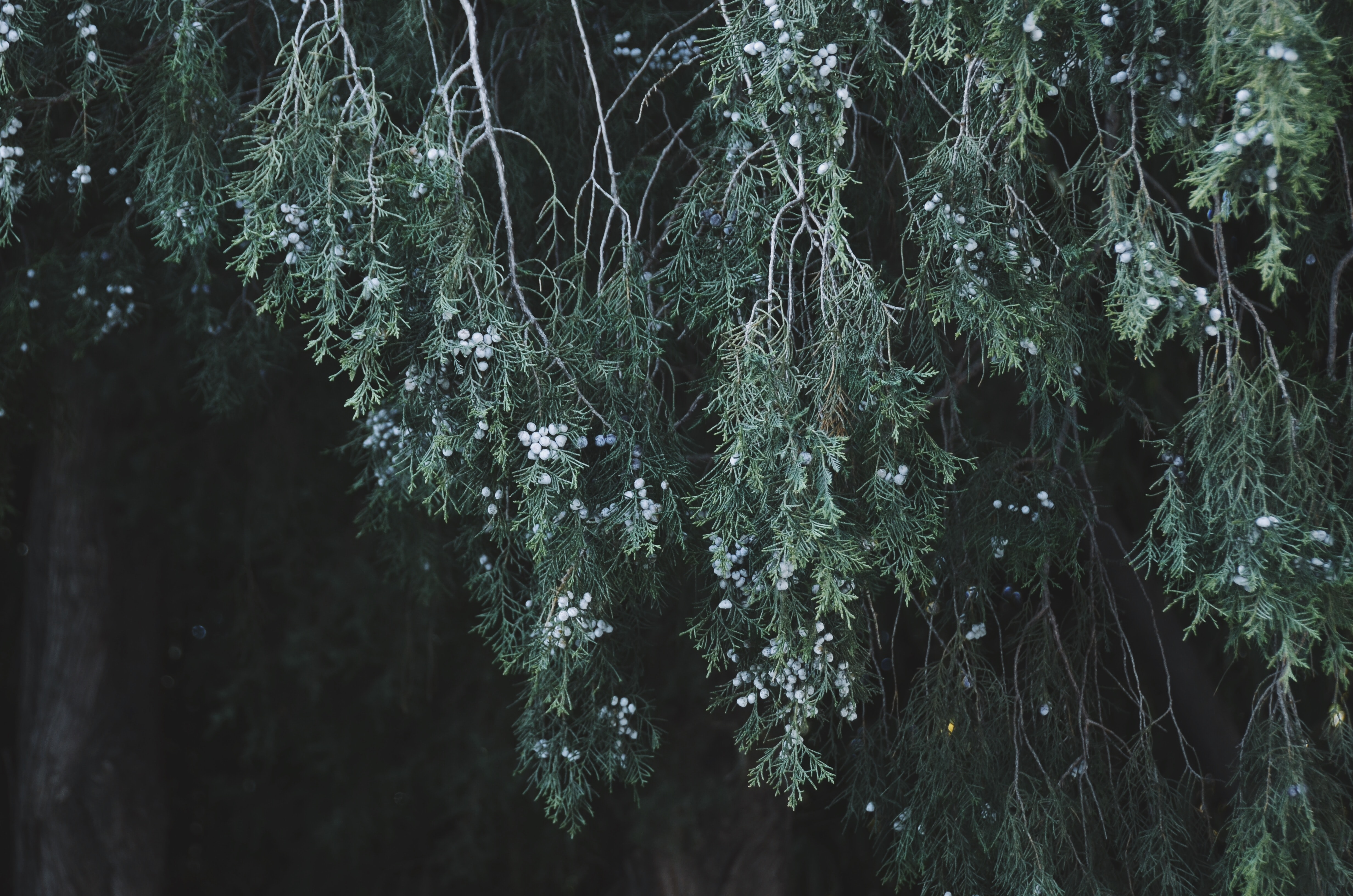 green tree with white petals