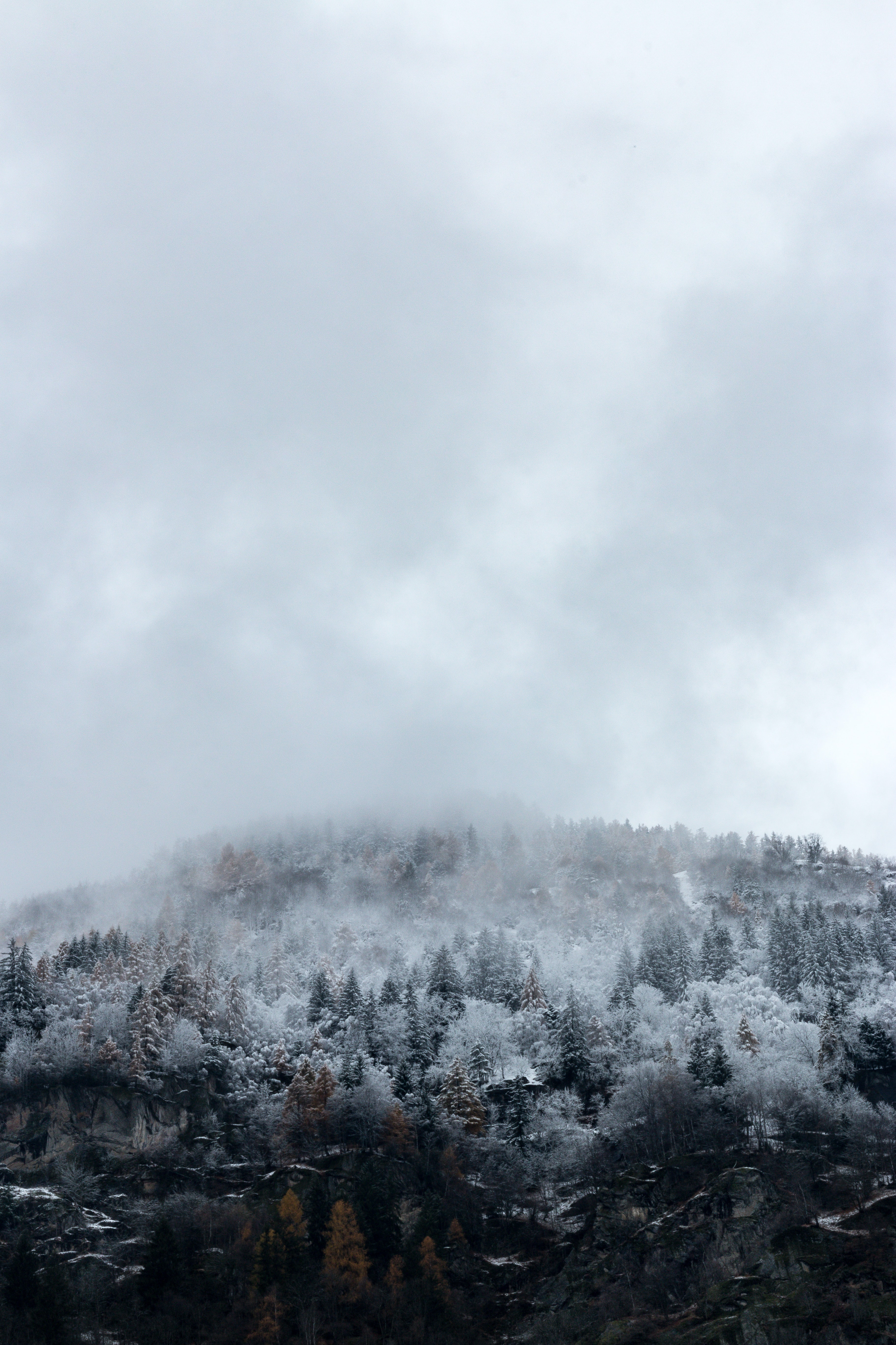 snow-covered forest during cloudy day