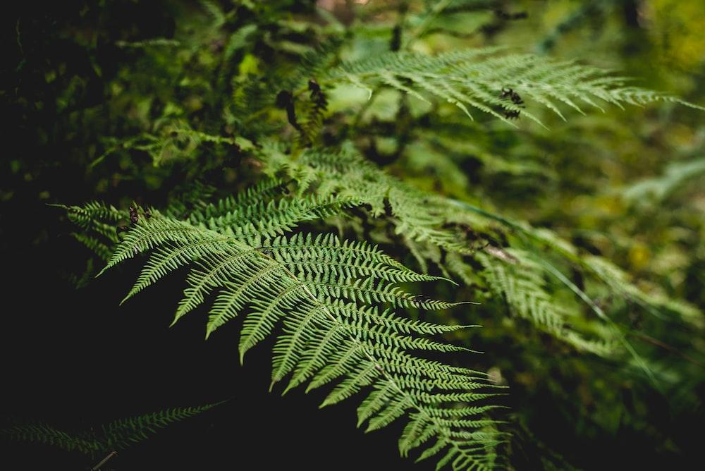 tilt shift lens shot of green fern plant