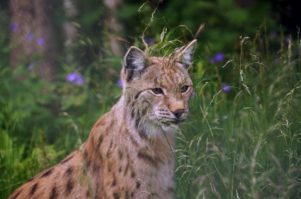 brown leopard in grass field during dayttime