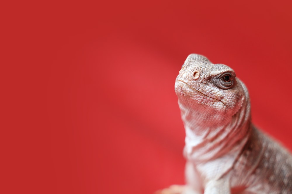macro photo of white spotted lizard