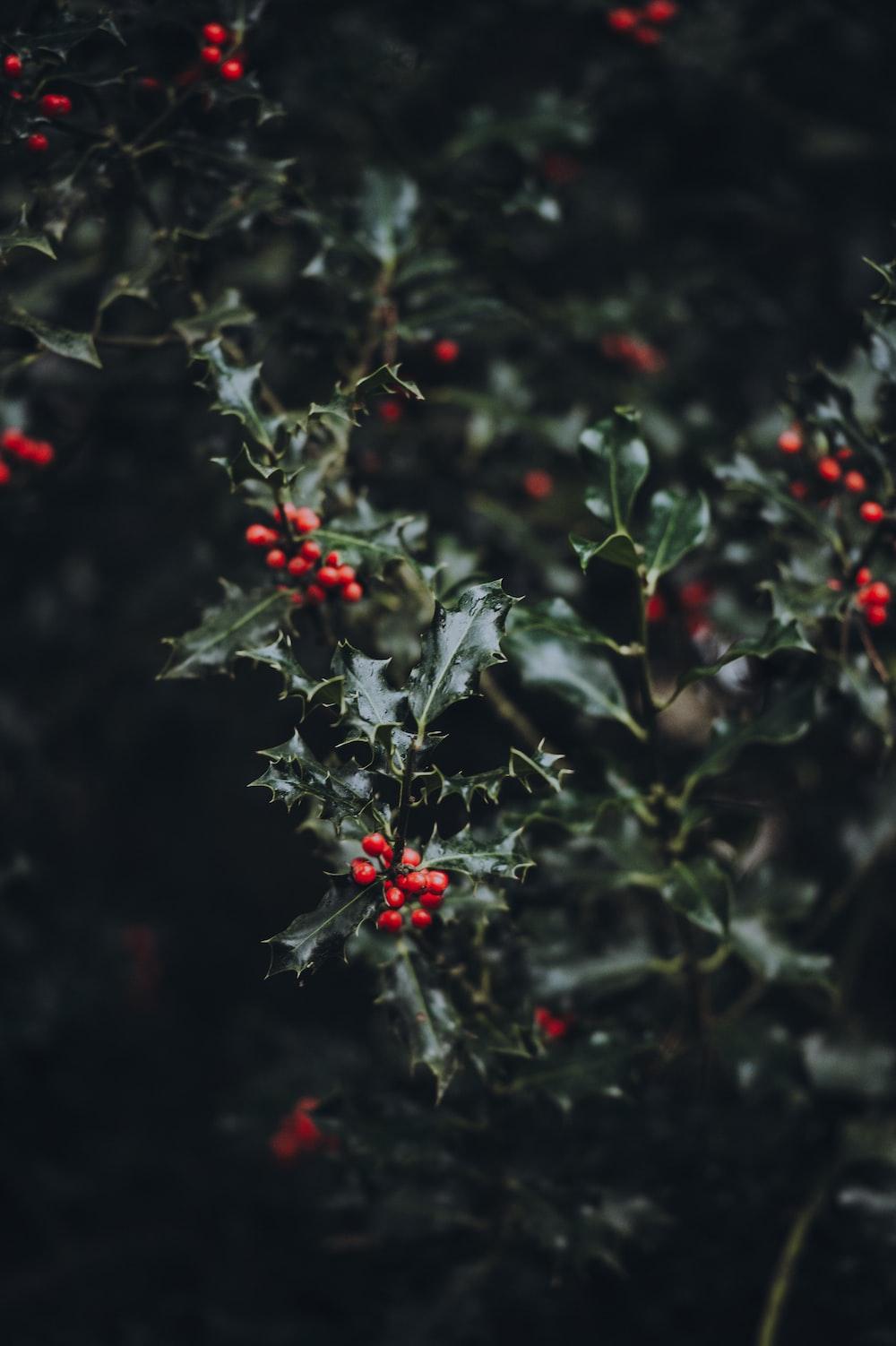 red fruit closeup photography