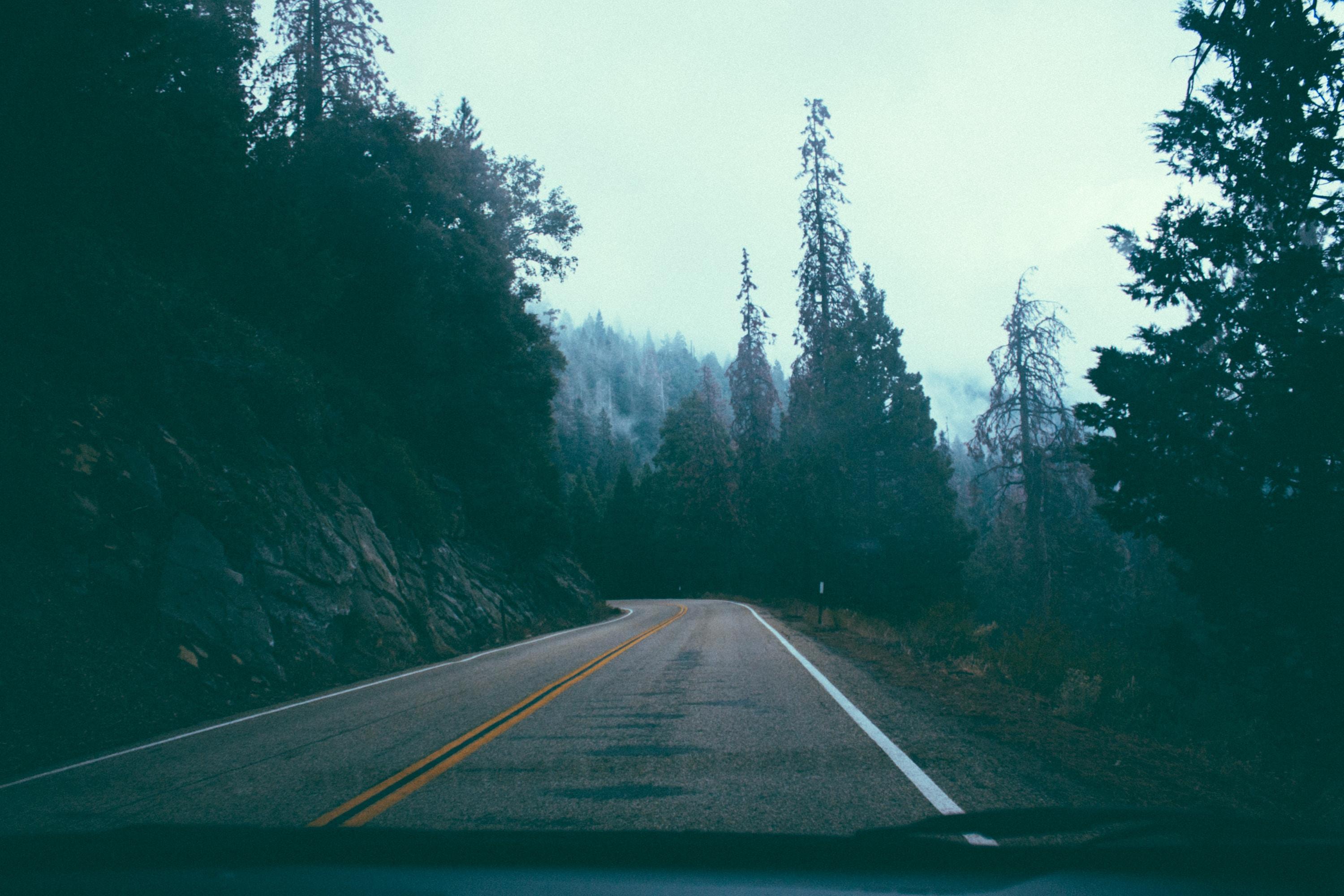 gray asphalt road in between trees