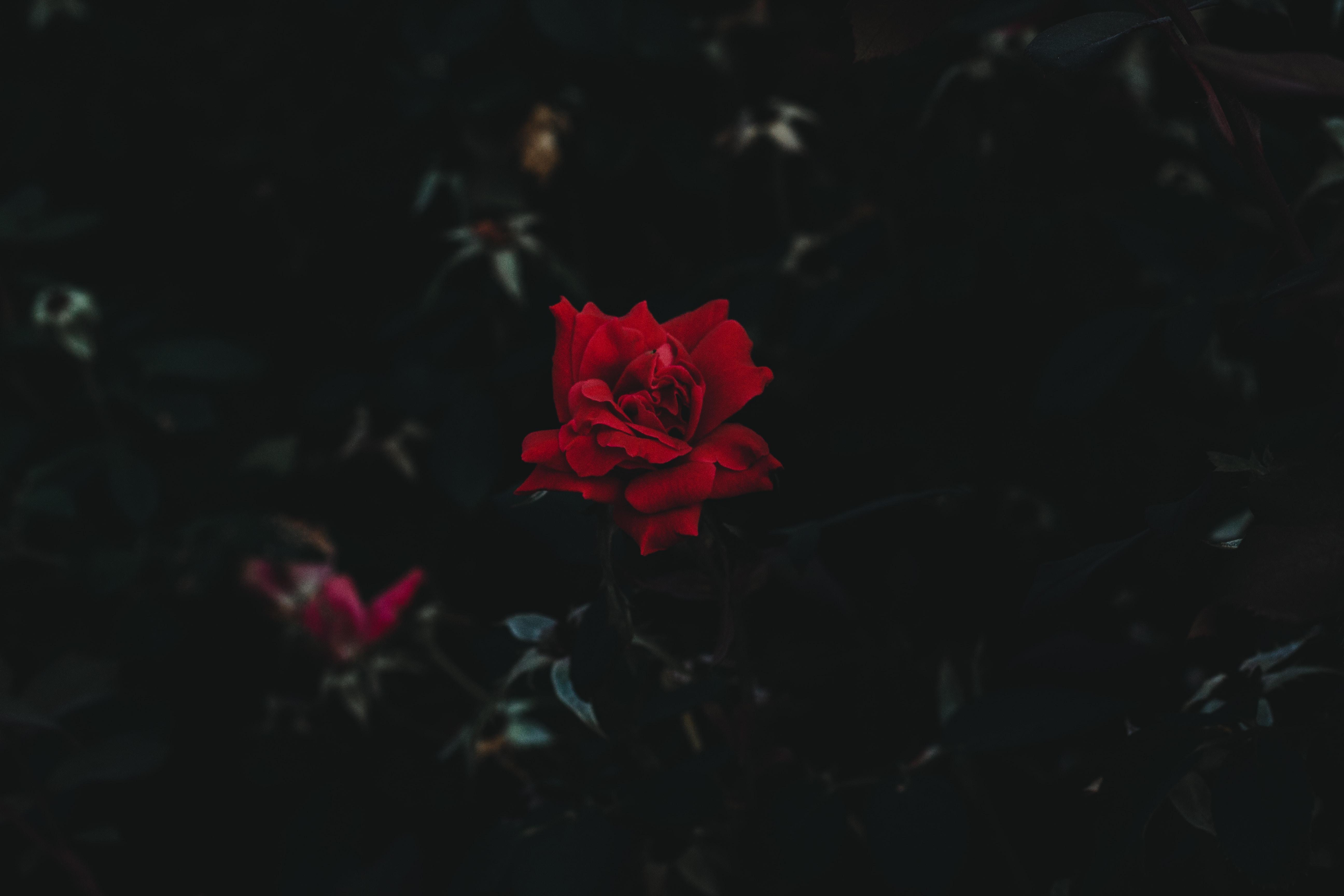red petaled flower closeup photo