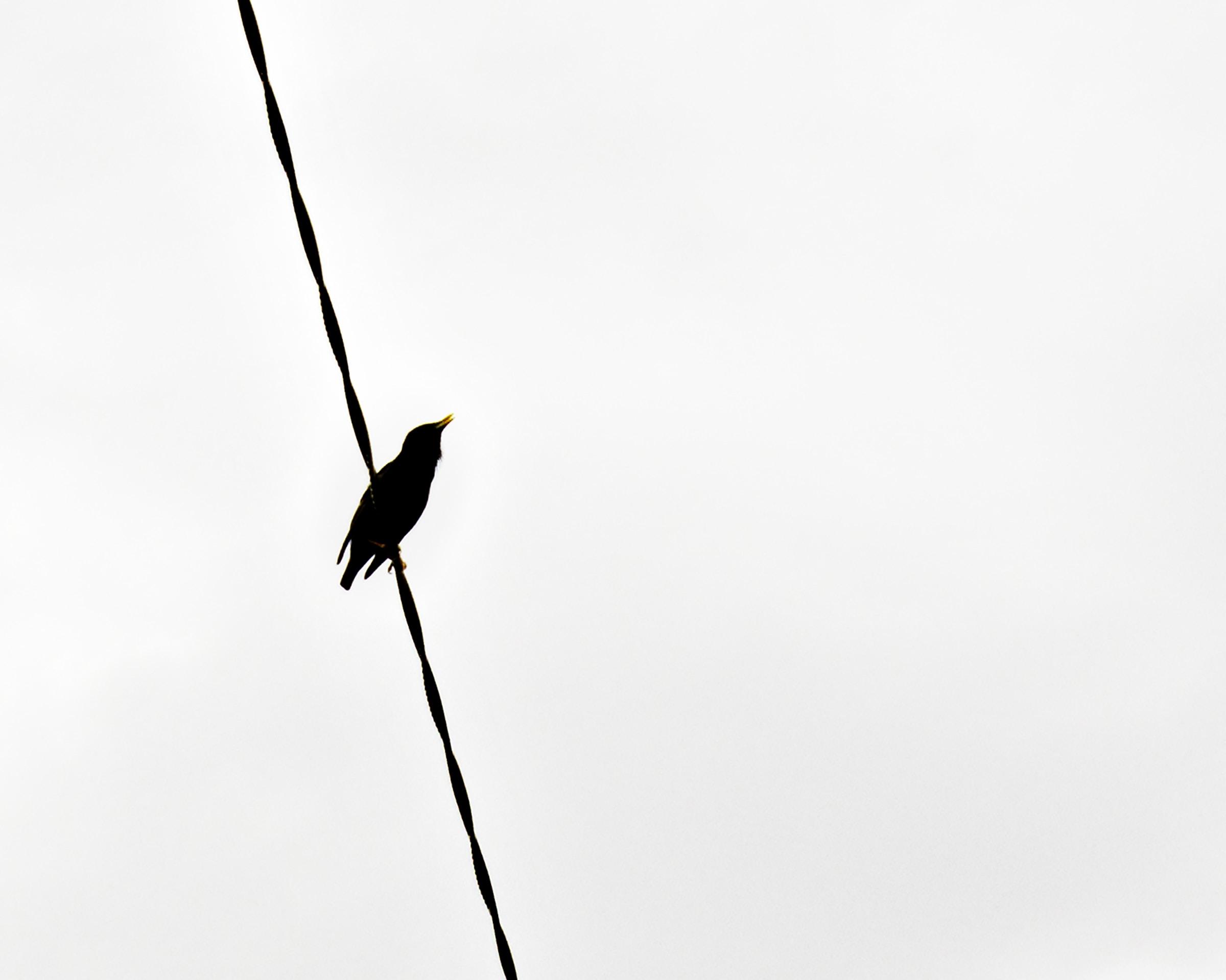 black bird on black wire