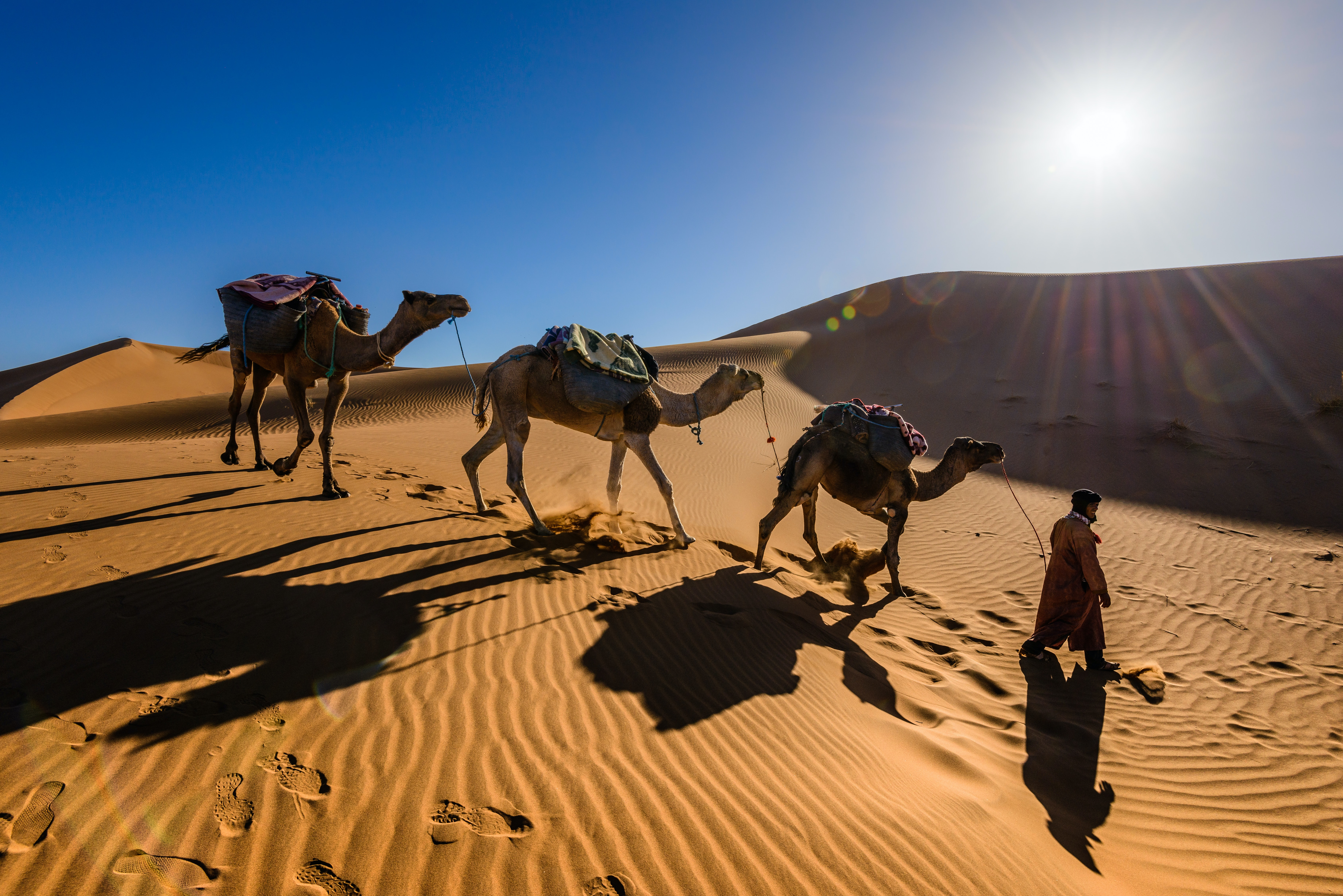 man walking along with camels in desert
