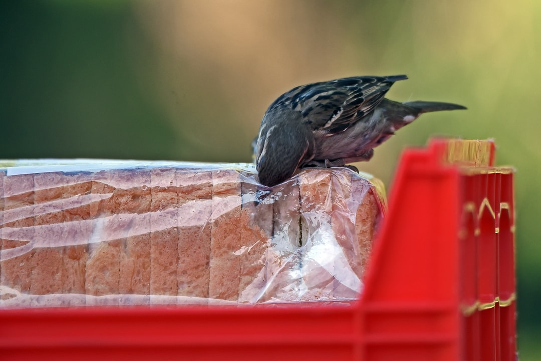 Some enterprising sparrows have learned to steal bread in the loading dock, before it gets to the supermarket shelves.