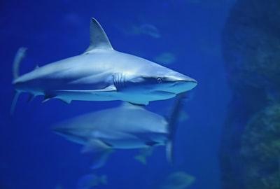 underwater photography of shark
