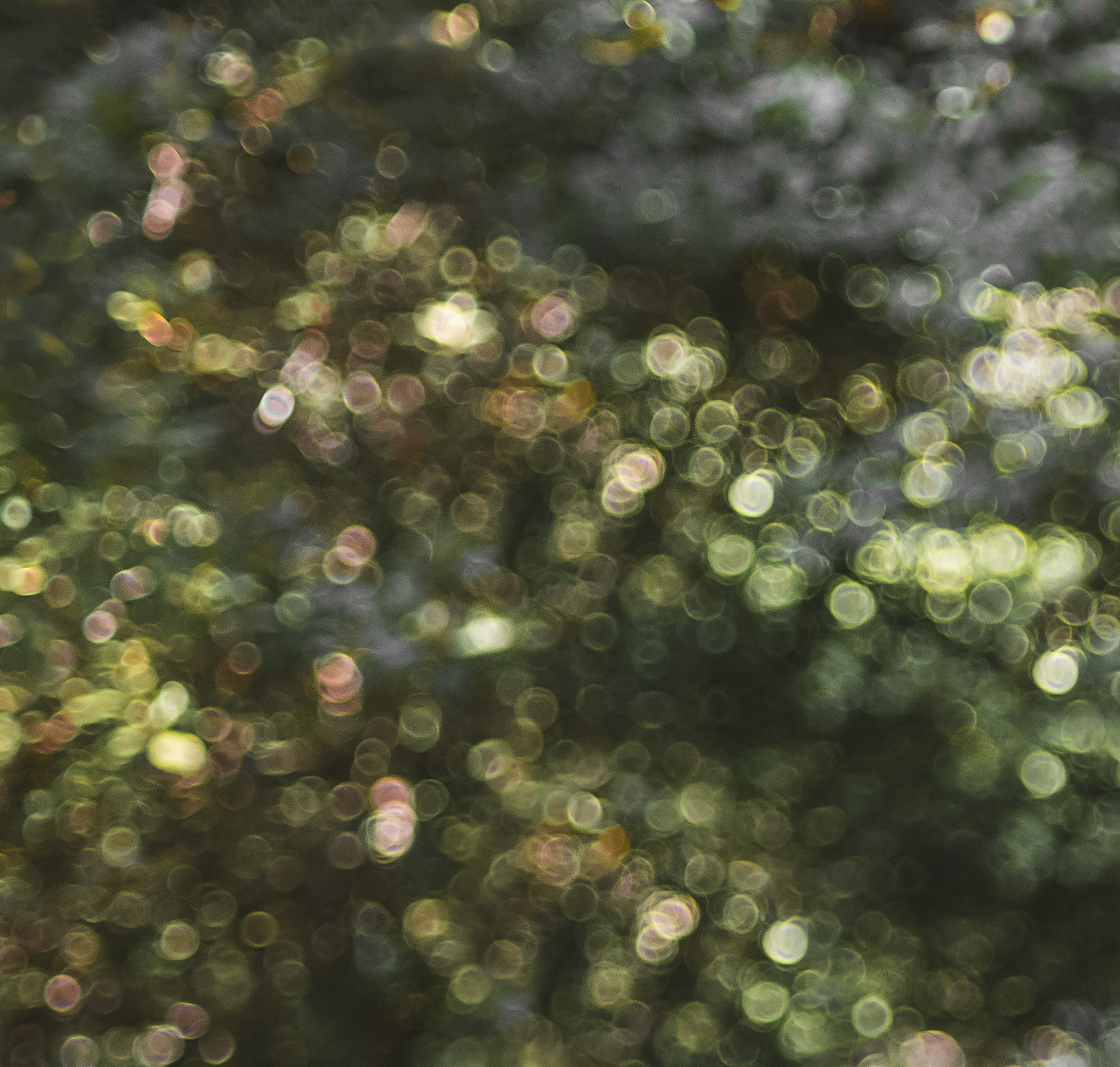 Best 20+ Bokeh Pictures | Download Free Images on Unsplash