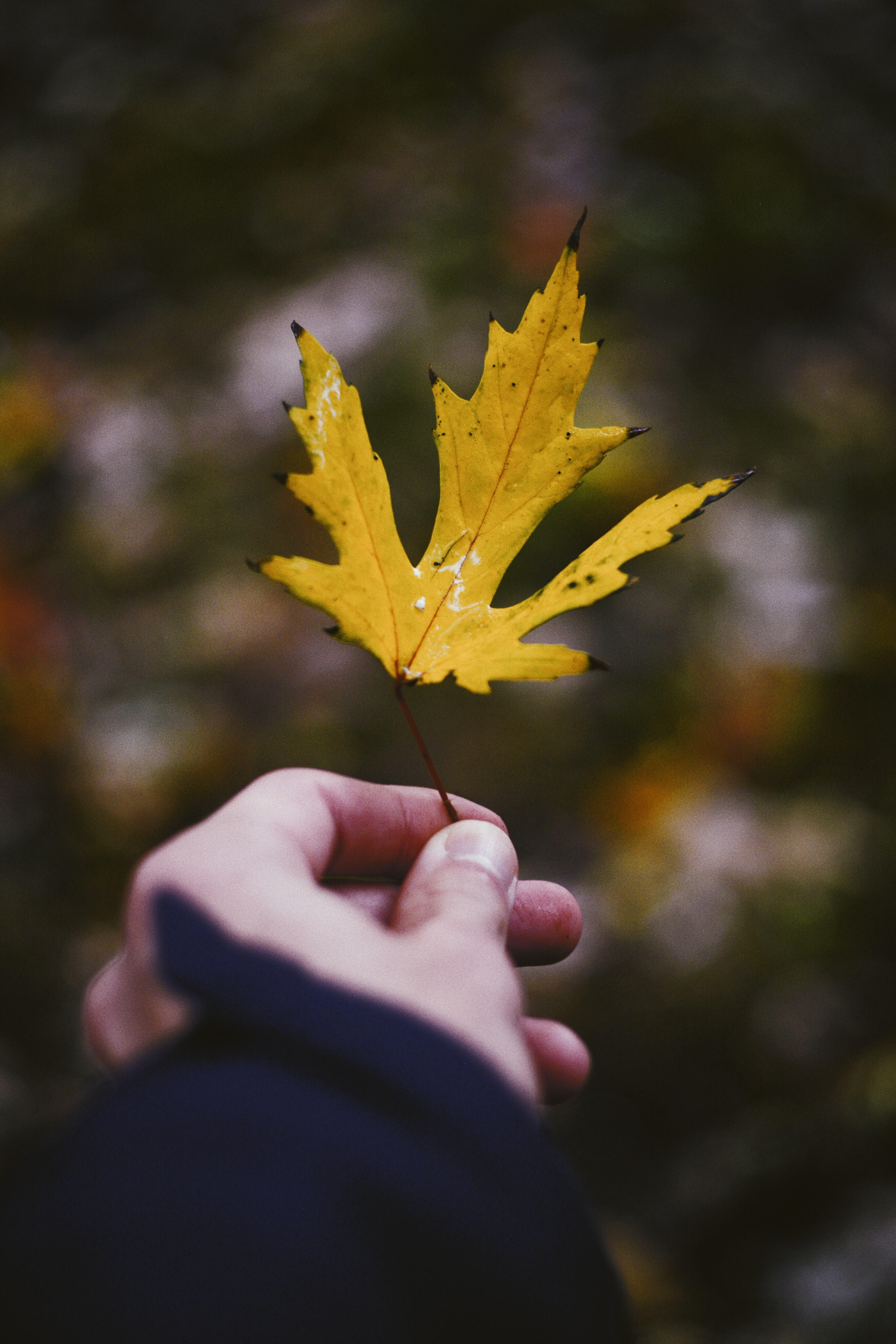 selective focus photography of person holding yellow leafed plant