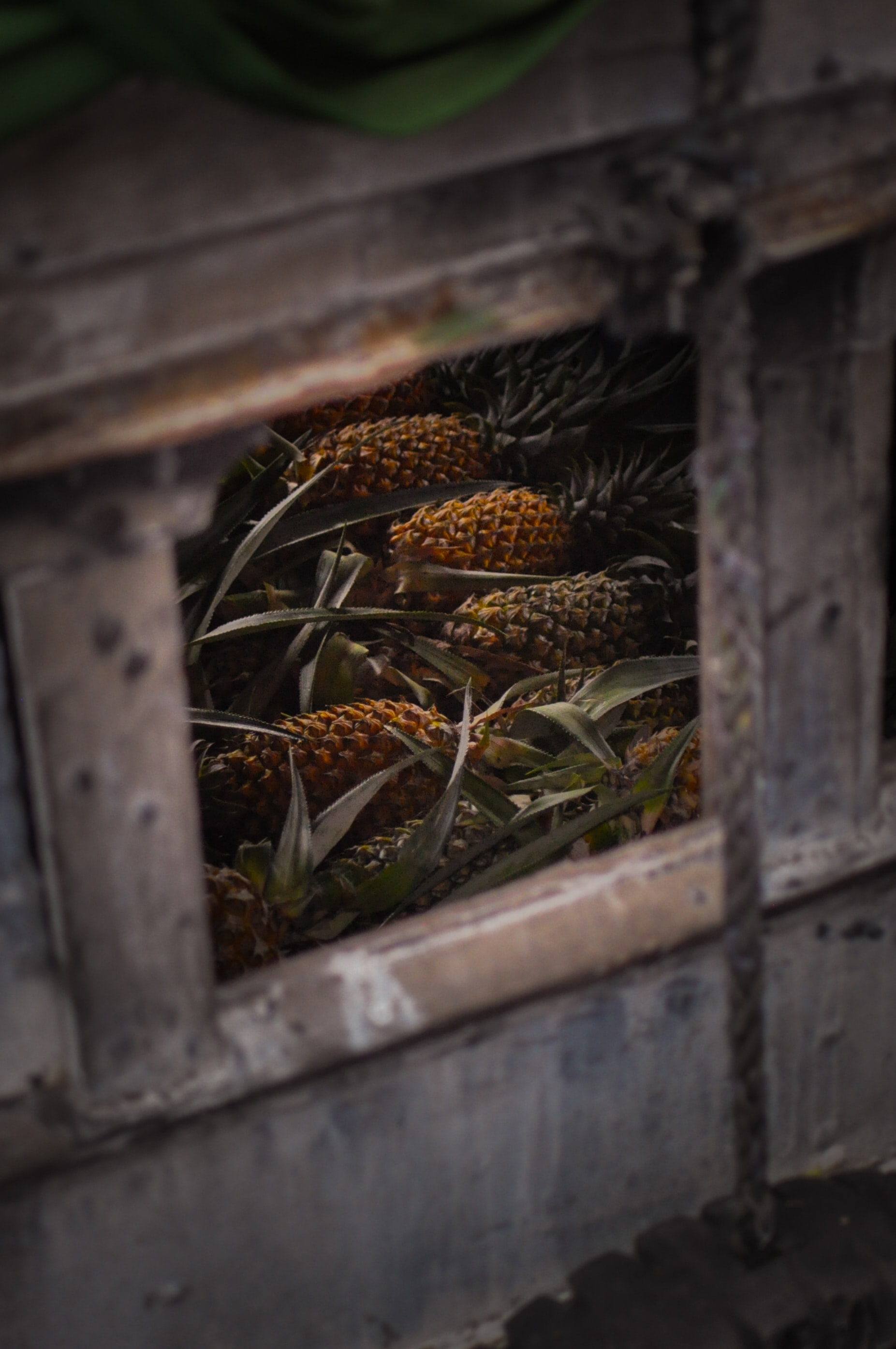 selective focus photography of pineapples