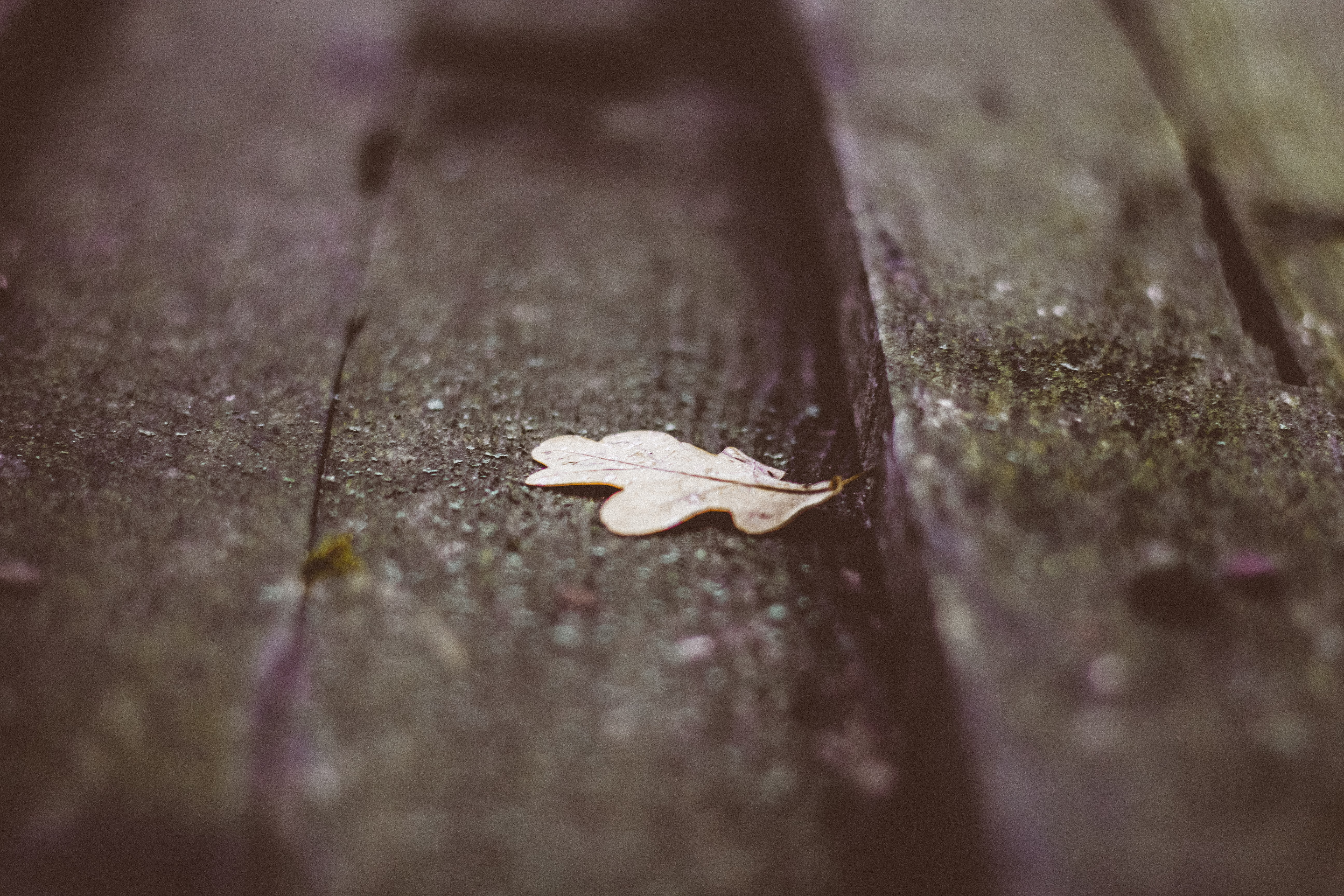white leaf on wooden surface