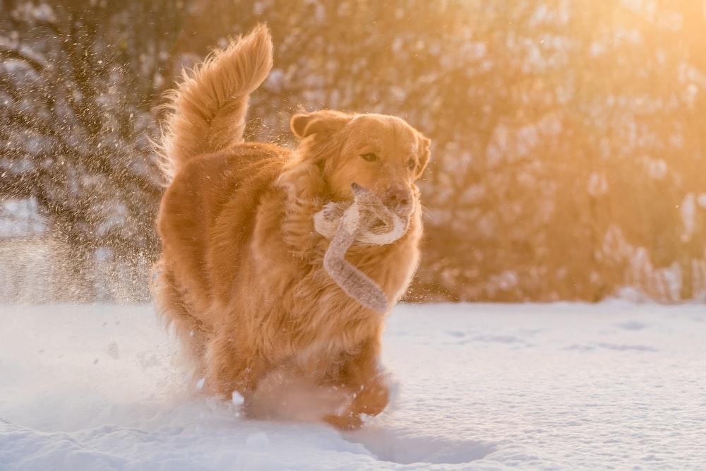 dog running on show