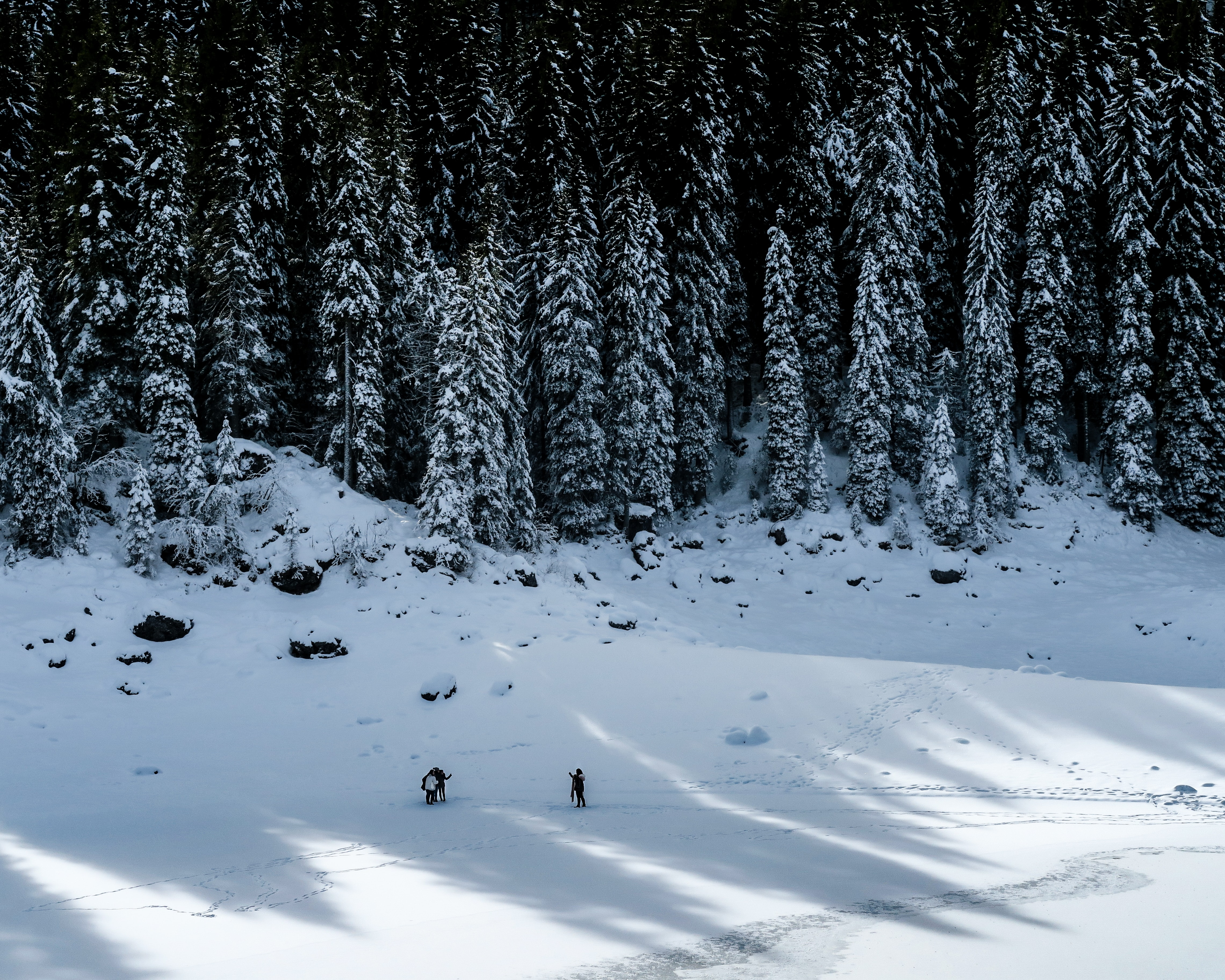green trees covered by snow
