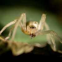 macro shot photo of beige spider
