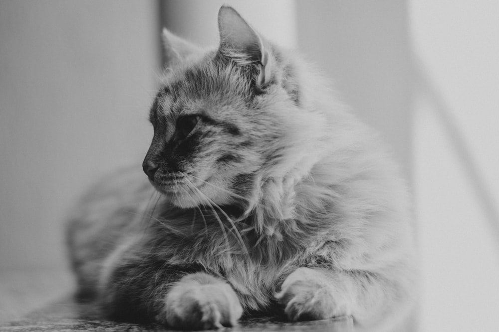 grayscale photo of cat sitting near window